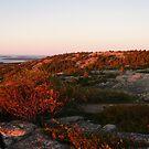 Landscape Photography - Acadia 08 by Samantha Haney Press