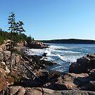 Landscape Photography - Acadia 09 by Samantha Haney Press