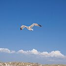 Seagull in the Sky by Renee D. Miranda