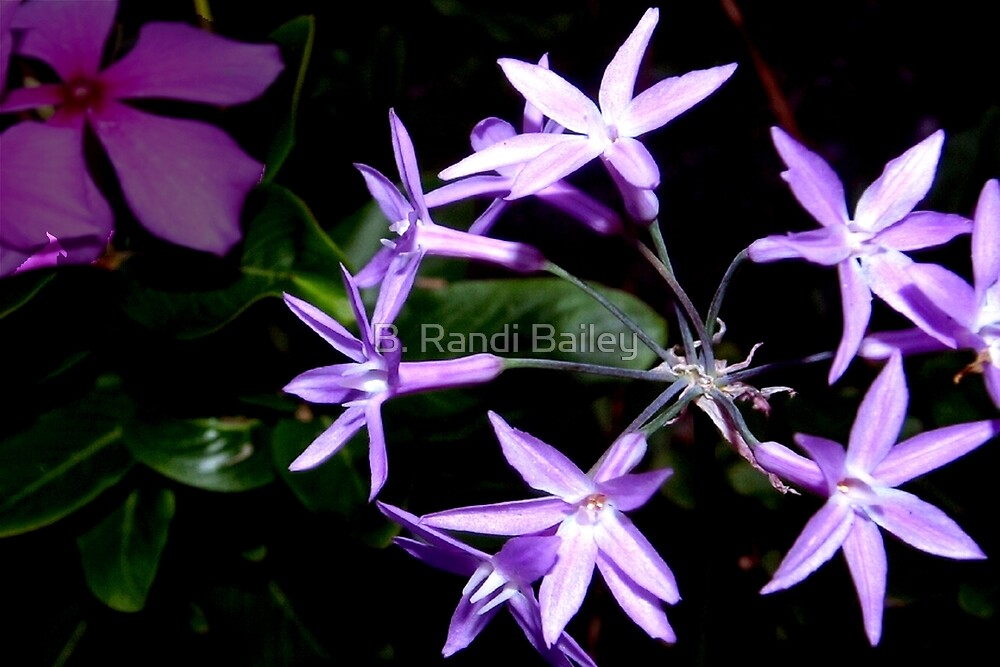 Purple star flower combo by ♥⊱ B. Randi Bailey