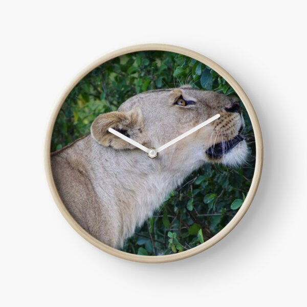 Lioness after the hunt Clock