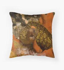 Sieve-Patterned Moray Throw Pillow