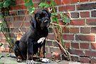 Yuki Found Her Stick! by Jo Nijenhuis