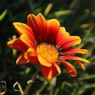 Spring Orange by tidalcreations