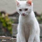 Quandra the Kitty :) by Susie Peek