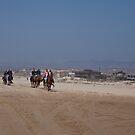 Horses at Pismo Beach by Renee D. Miranda