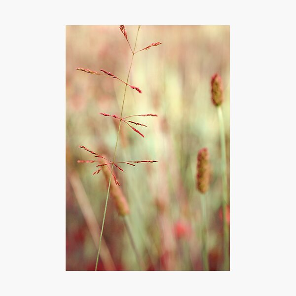 avant-plan Photographic Print