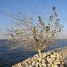 Lonely Tree by Savannah Gibbs