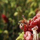 little bee butt by littlebeebutts