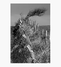 Lonely Tree - Carrowmore Lake, Mayo Photographic Print