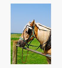 Amish Horse in PA Photographic Print