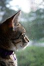 Gazing At The World Outside by jodi payne