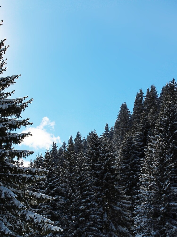 Brambrüesch, Winterwald  von graubuendner