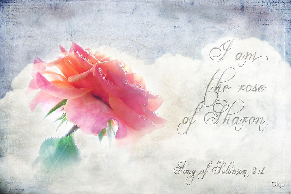 Rose of Sharon by Olga