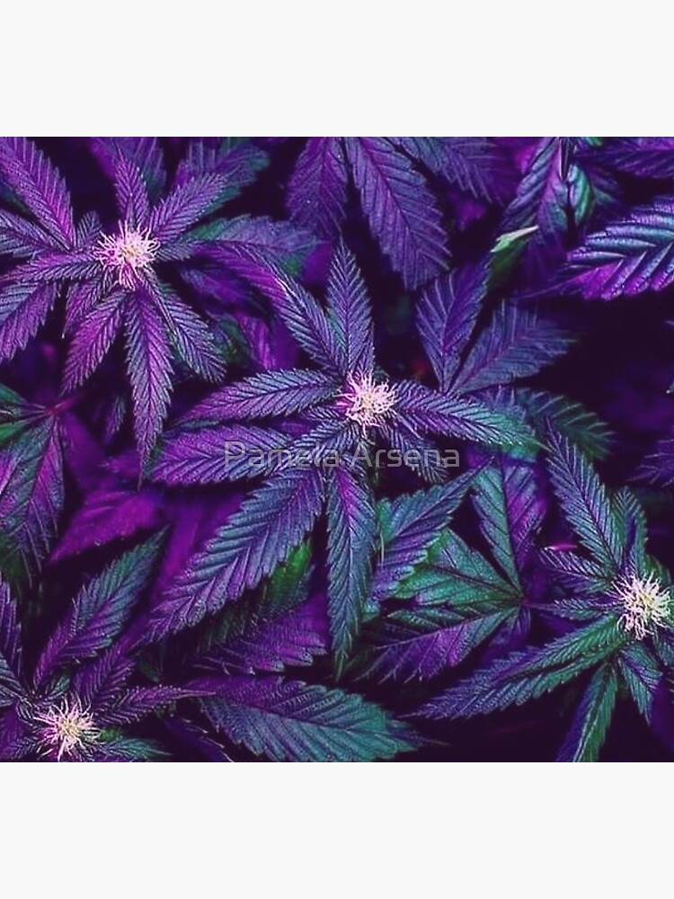 Psychedelic Purple Cannabis Marijuana Weed Pot Leaves by xpressio