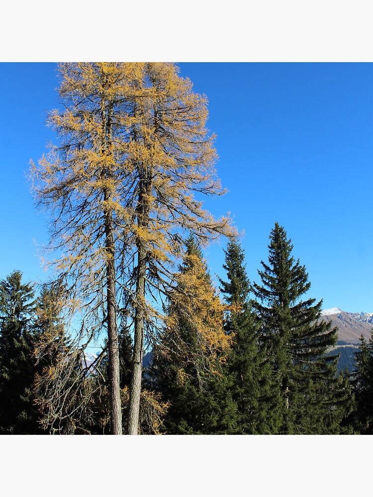 Brambrüesch, Wald im Herbst von graubuendner