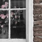 Roses in the Window by KellyHeaton