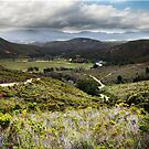 Botlierskop Game Reserve by Roger Barnes