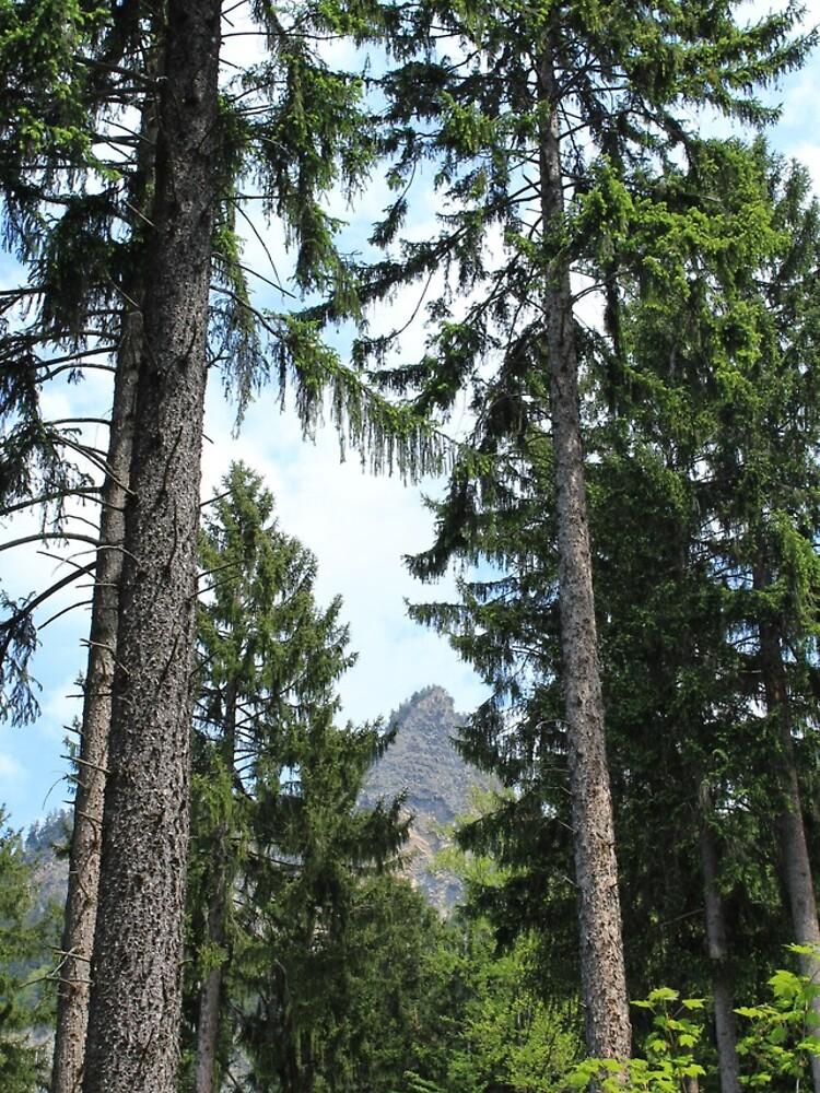 Chur, Bündner Wald, Fürstenwald von graubuendner