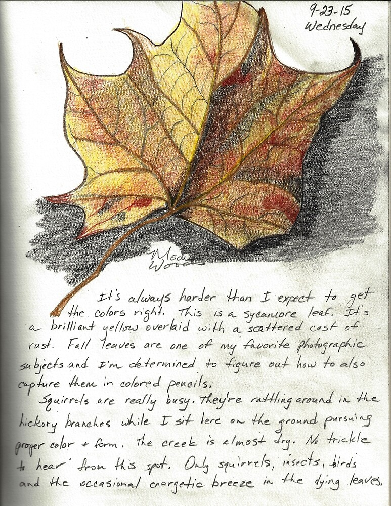 Nature Sketching Day 3- Yellow Sycamore Leaf by wildozark