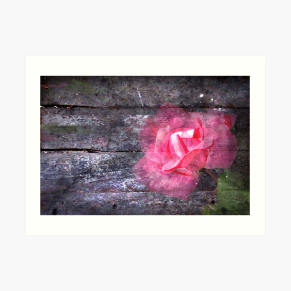 For Ash:  Once You Gave Me a Rose... Art Print