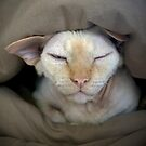 Sleepy Oliver 2 by Glennis  Siverson