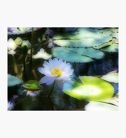 Water Lily Orton effect Photographic Print