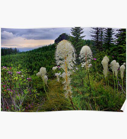 Wild Bear Grass ~ Oregon Cascades ~ Poster
