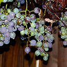 grapes of wrath by andytechie