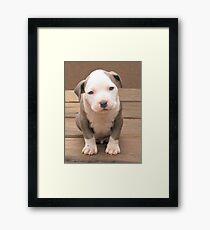 I'm Stubby Framed Print