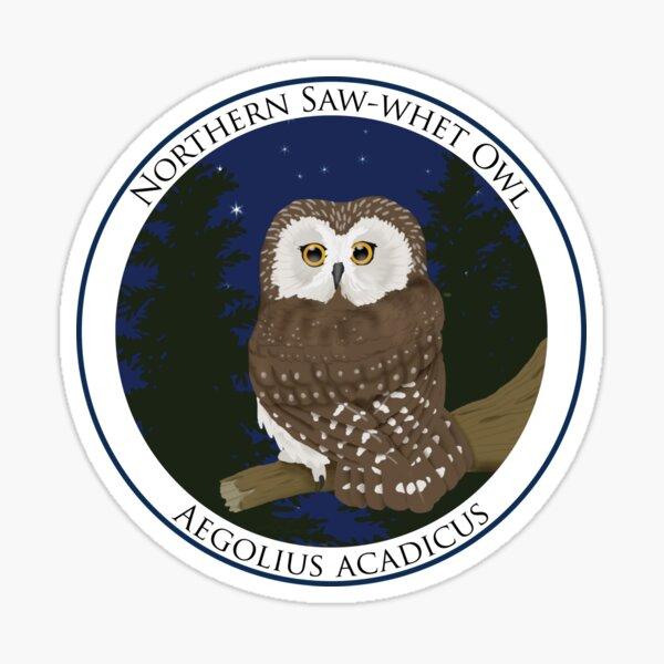 Northern Saw-whet Owl Badge Sticker