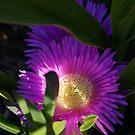 Purple Peeking for Sunshine by CleoJK