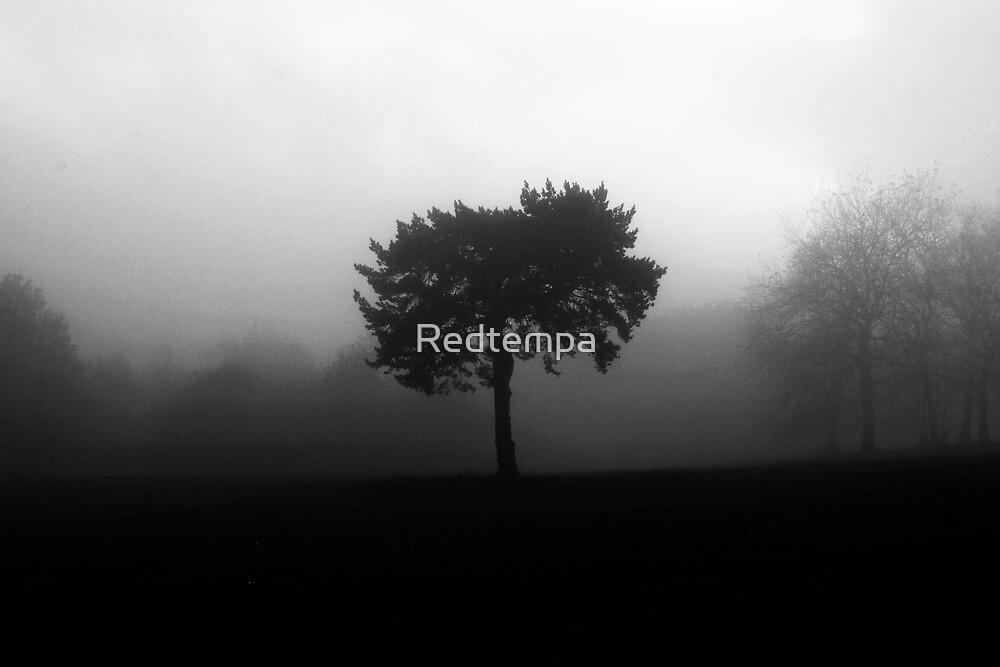 WITHOUT CEREMONY by Redtempa