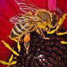 Pollination 37 by Gareth Jones