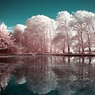 Candy Floss Reflections by Cat Perkinton