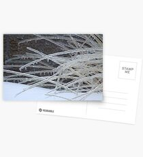 Frozen Grass Postcards