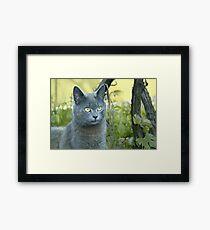 Gray cat outdoors Framed Print