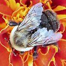 Bee-having © by Dawn Becker