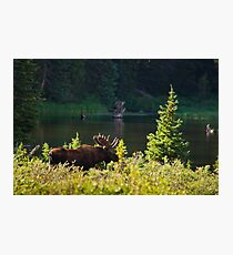 Moose At Brainard Photographic Print