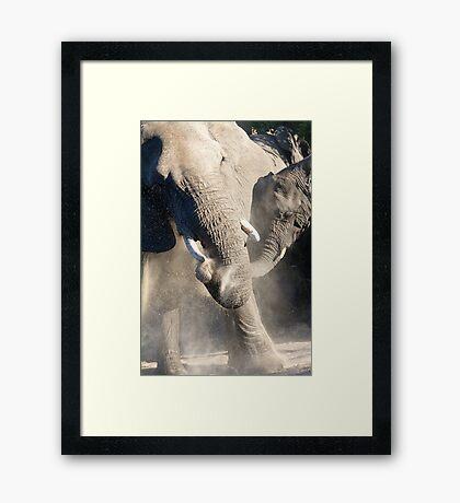 Dust Bath Time Framed Print