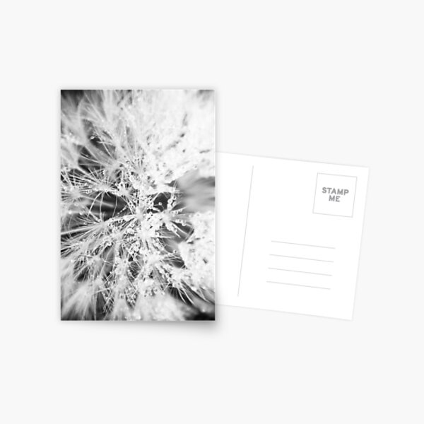 Dandelion, Close up. Postkarte