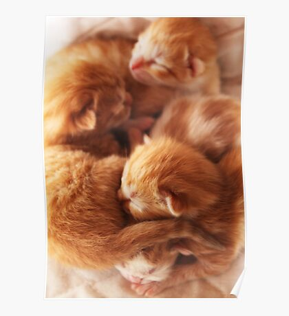 Day old kittys Poster