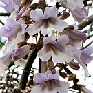 Purple and White Bells by Nicki Baker