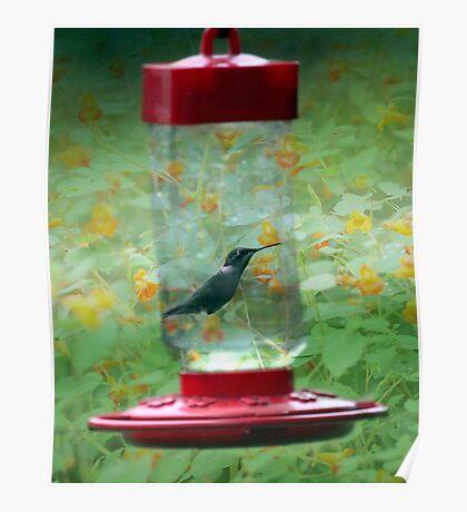 Hummingbird Magic Poster