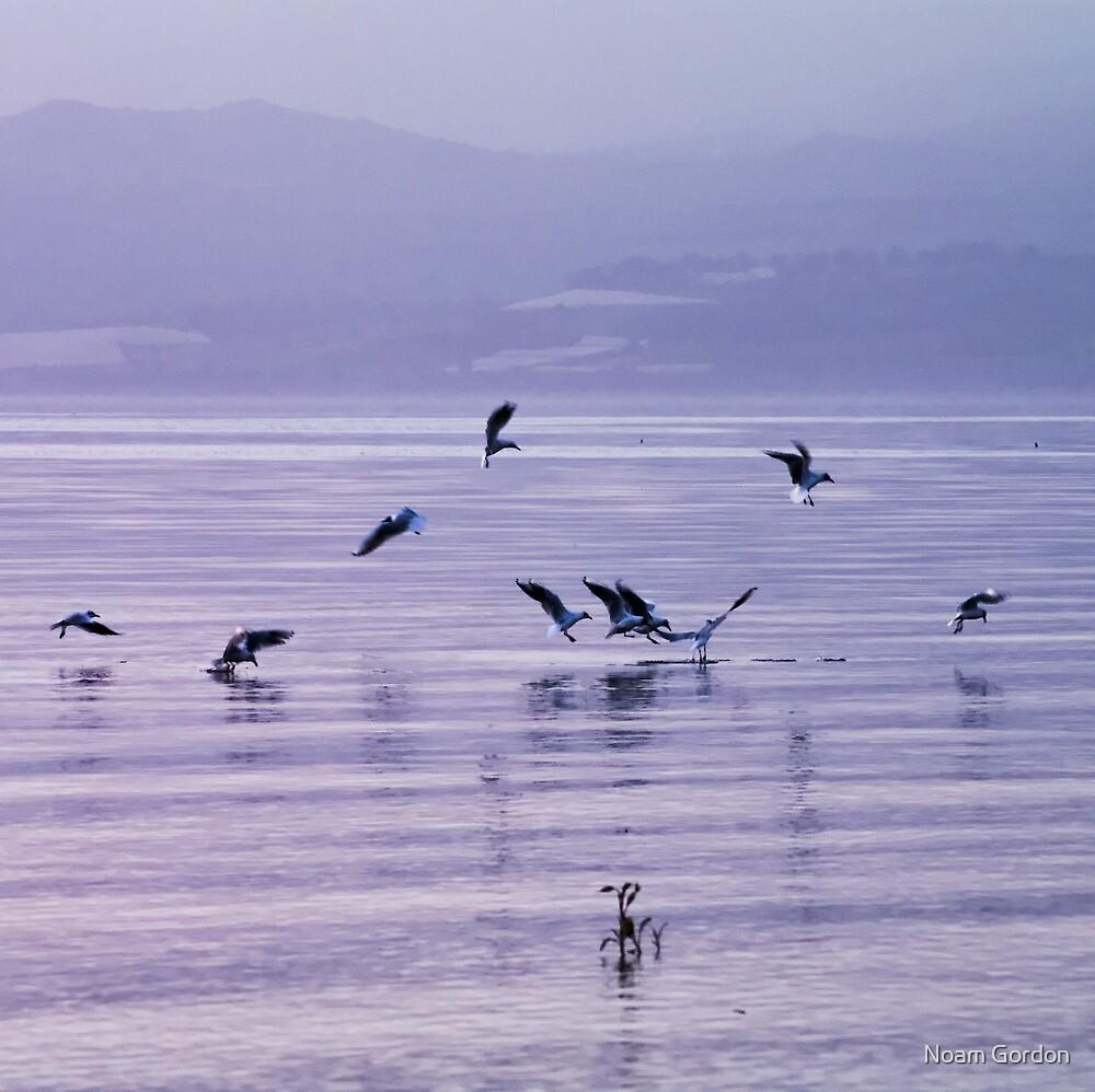 Charging Seagulls  by Noam Gordon