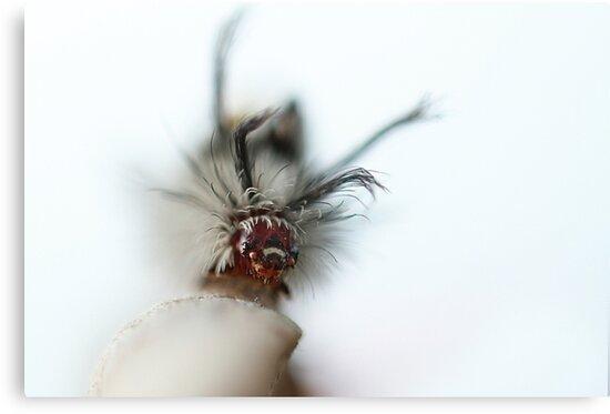 Caterpillar by KatsEyePhoto