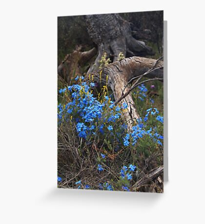 Lechenaultia and Tree Greeting Card