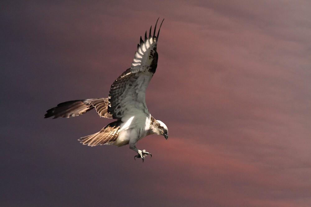Nest Landing by byronbackyard