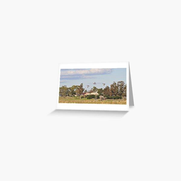 Ducks in Flight - Yan Yean Greeting Card