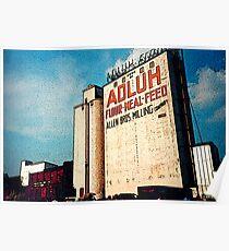 Adluh Flour in the Congaree Vista Poster